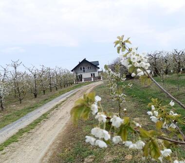 Gospodarstwo rolne sadownicze 4,21 ha w Kotlinie Sandomierskiej
